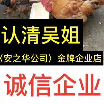 快大黄鸡苗  …23年诚信店、店内有(诚信企业)证明书