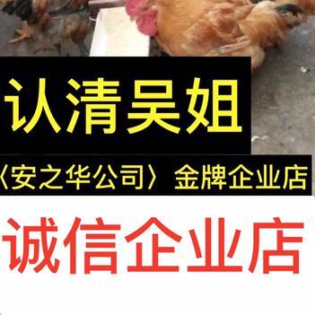 良凤花鸡苗  快大鸡苗…23年诚信、店内有(诚信企业)证明书