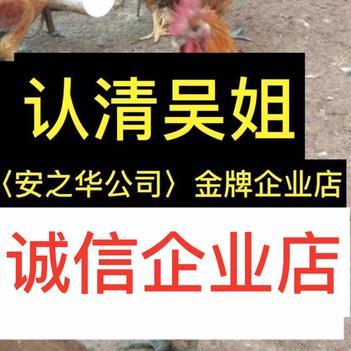 麻鸡苗  快大青脚…23年诚信、店内有(诚信企业)证明书