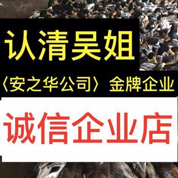 杂交鸭苗  …23年诚信店、店内有(诚信企业)证明书