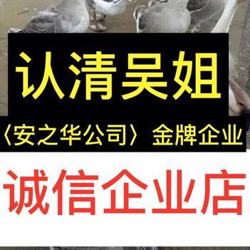 大白沙鹅苗  …狮头鹅苗23年诚信,店内有(诚信企业)证明书