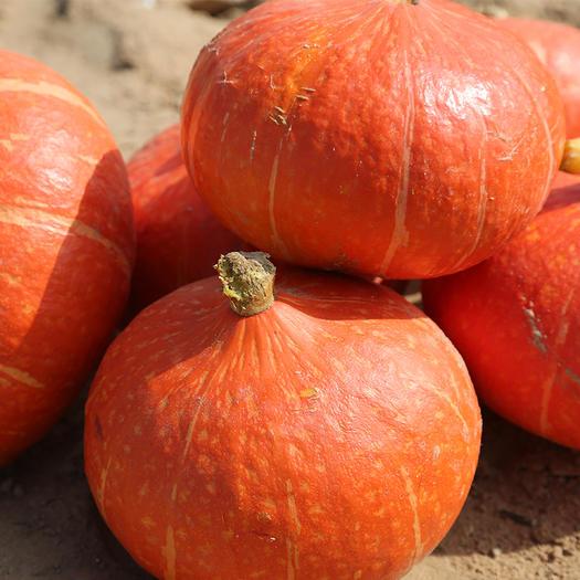定边县金红冠南瓜 2~4斤 扁圆形