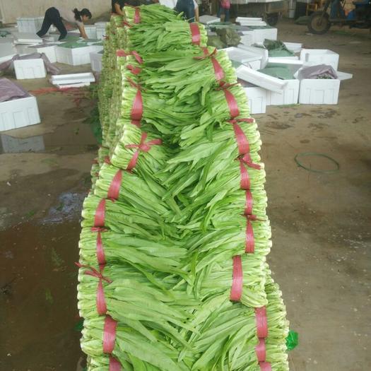 邯郸永年区青油麦 15~20cm以上
