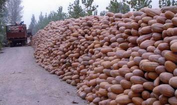 盐城海南二号 6~10斤 长条形