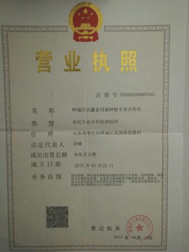 枣庄峄城区灰平菇 3-5cm 黑色