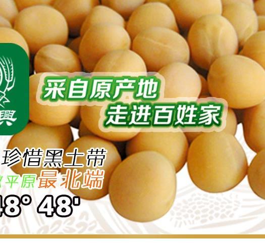济南黑河49 生大豆