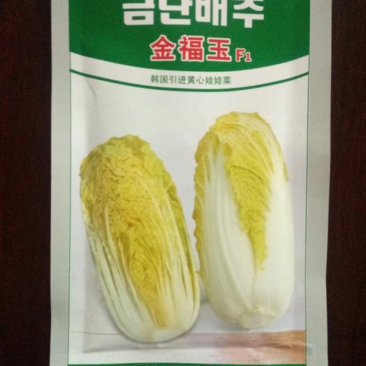 烟台莱阳市娃娃菜种子 韩国金福玉
