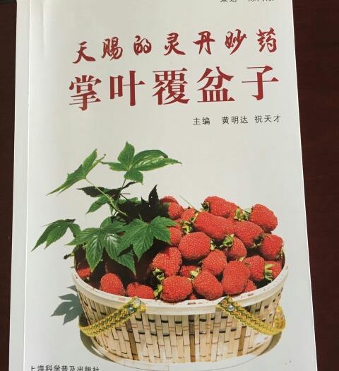 杭州淳安县覆盆子种苗