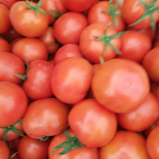米易县 四川米易大红西红柿 石头番茄 专业团队 多年代办经验