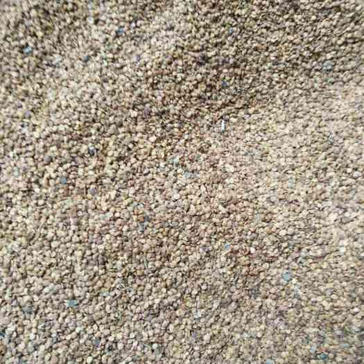 酒泉金塔县 19年新枸杞种子发芽率高,水洗无杂