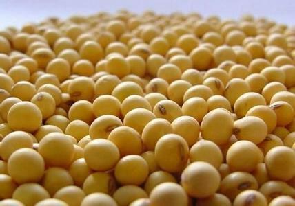 伊春伊春区 非转基因东北高蛋白大豆 量大优惠