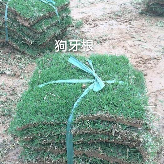 济宁梁山县护坡草种子