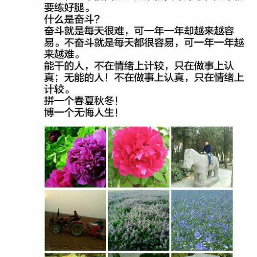 亳州谯城区白芍种子 质量第一~服务第一