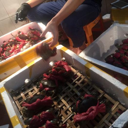 温州鹿城区青蟹 6.0两 公蟹