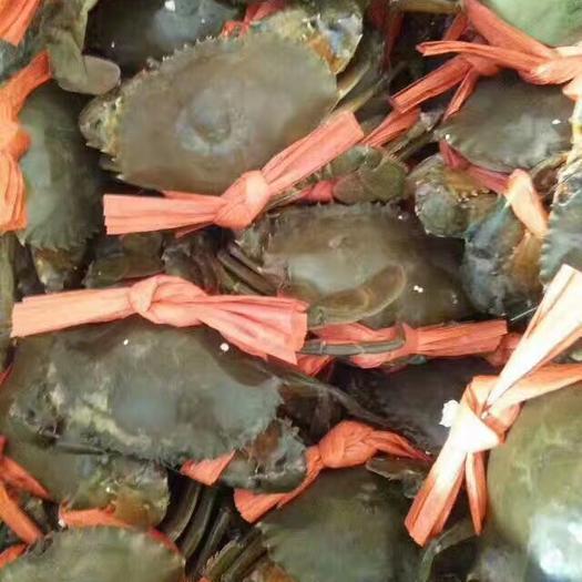 防城港东兴市青蟹 4.0两以上 母蟹