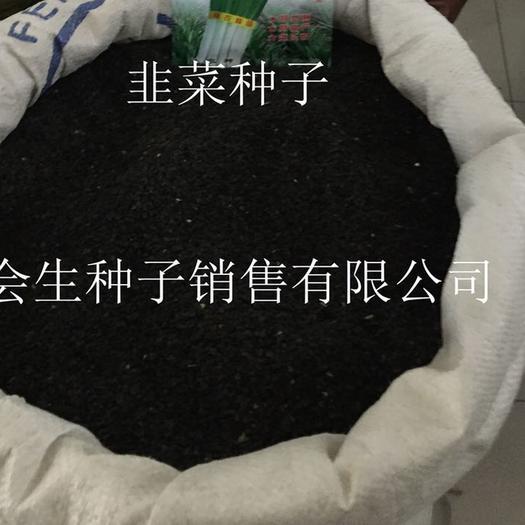 永濟市 批發散裝韭菜種子 平韭 雪韭 漢中韭 紅根白根品種齊全當年產
