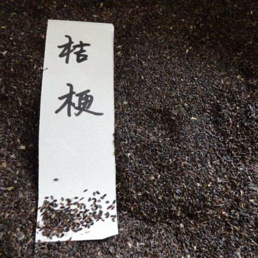 安国市黄芪种子
