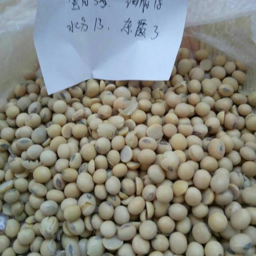 天津塘沽 进口42蛋白乌克兰大豆