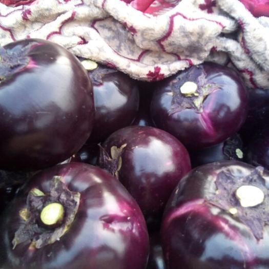 邯郸快园茄 本地长年供应各种蔬菜
