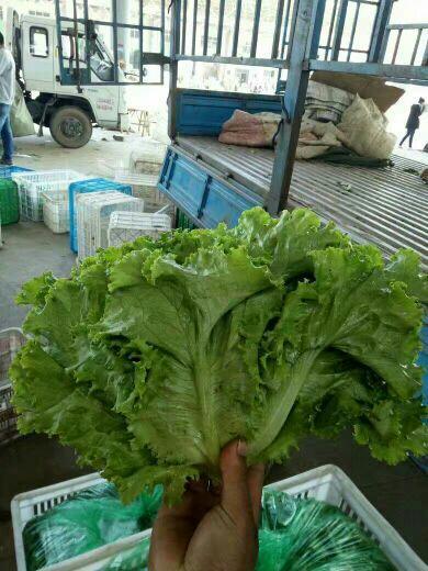 邯鄲散葉生菜 5~6兩