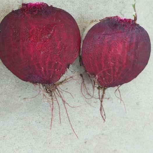徐州铜山区红甜菜 15cm以上