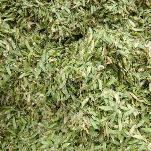 唐山豌豆秧