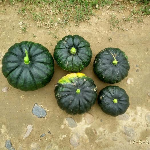 蓬安县日本南瓜 1~2斤 扁圆形