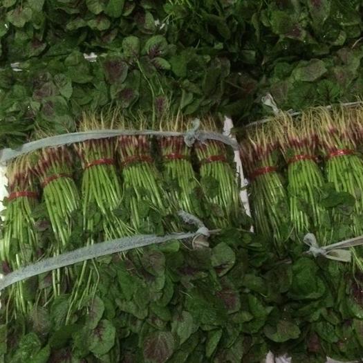 杭州萧山区红苋菜 20-25cm 紫红