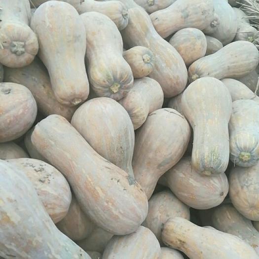 嘉鱼县美玉南瓜 4~6斤 长条形