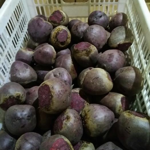 徐州铜山区甜菜根 15cm以上