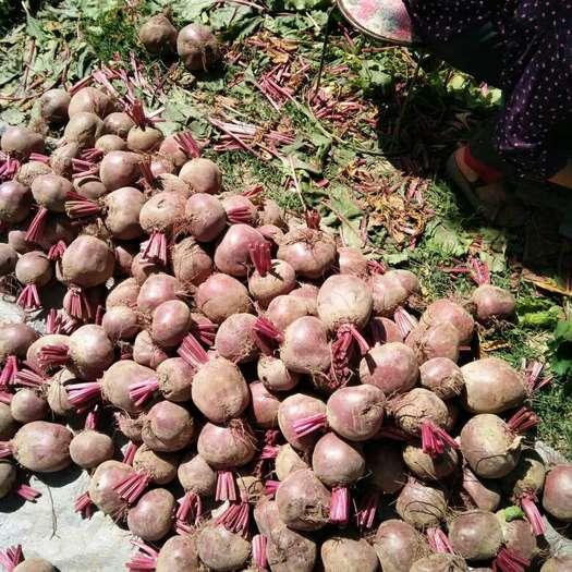 徐州铜山区甜菜叶 15cm以上