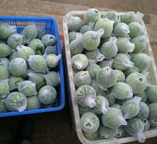 慈利县七叶早南瓜 0.7~1.0斤 扁圆形