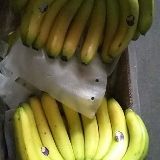 北京菲律宾香蕉