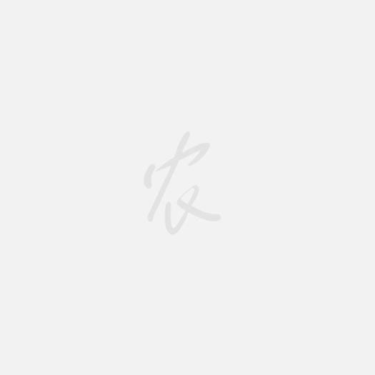 汕尾西杂鲟鱼 杂鱼一斤