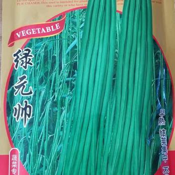 绿元帅豆角种子生长势强叶色深绿荚色油绿