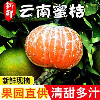 青皮蜜桔  【现摘现发】新鲜蜜桔早熟橘子酸甜蜜橘青皮柑橘应季新鲜水果桔子