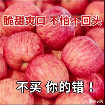 【脆甜多汁】山东烟台栖霞红富士苹果3/5/10斤新鲜当季水