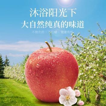现摘应季水果陕西秦阳苹果孕妇酸甜苹果批发