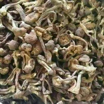 蘑菇 东北野生榛蘑干
