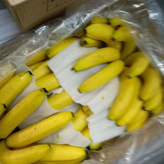 广州菲律宾香蕉 九成熟 50 - 60斤