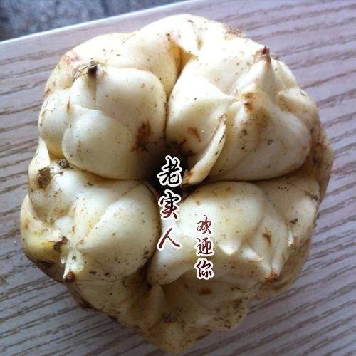 湘西龙山县百合种子