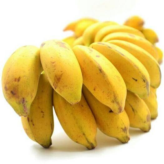 上林县小米蕉 七成熟