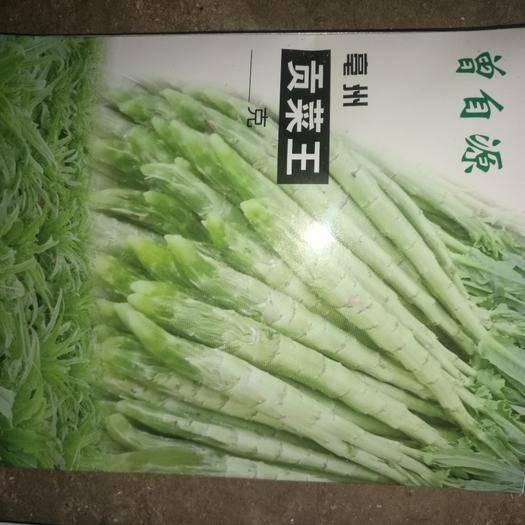 大理宾川县贡菜种子