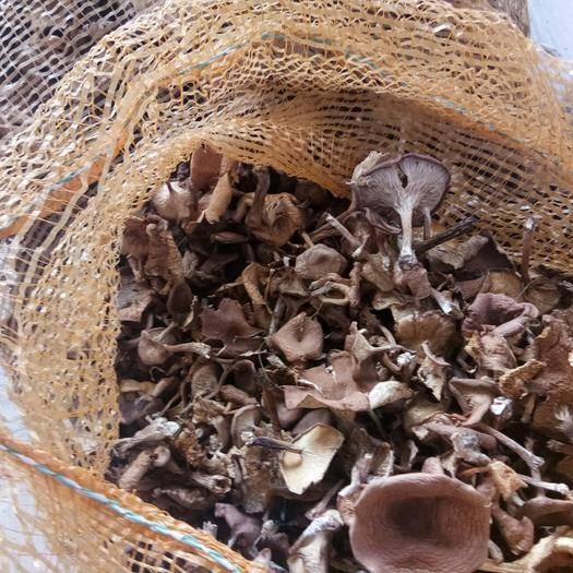 河北省承德市围场满族蒙古族自治县干草菇 袋装 半年