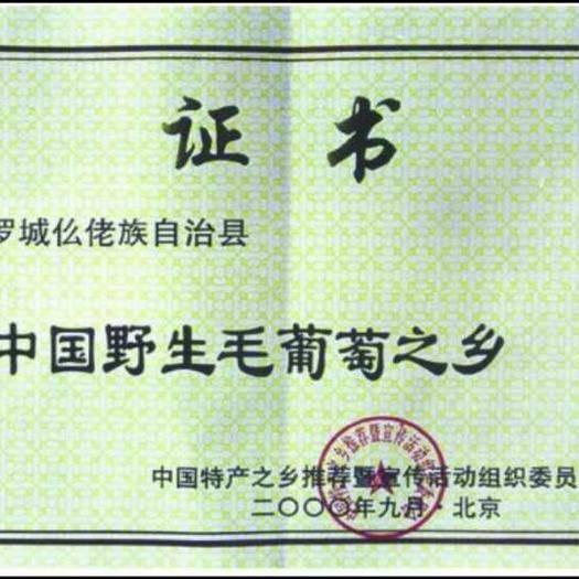 田东县山葡萄 5%以下 1次果 0.8-1斤