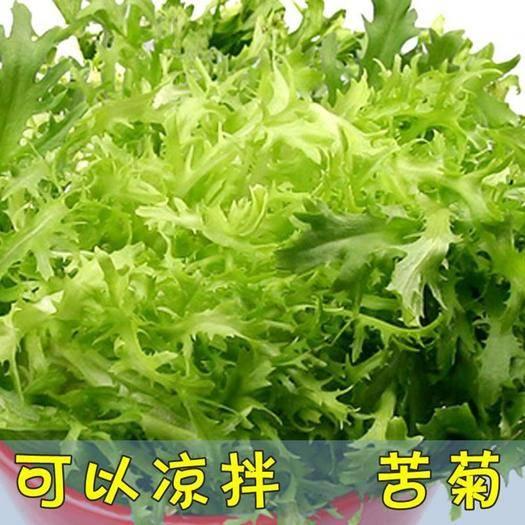 沭阳县苦苣种子