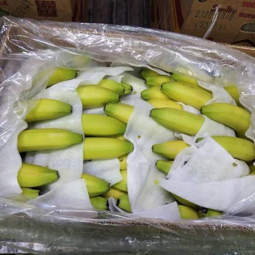 广州菲律宾香蕉 七成熟 40斤以下