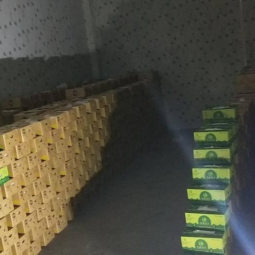 金华菲律宾香蕉 七成熟 40斤以下