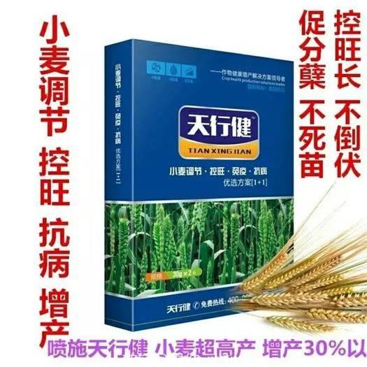 鄭州中原區普通小麥