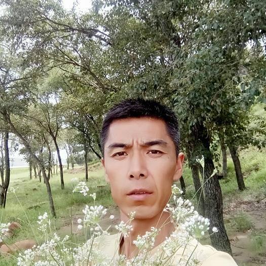 陕西省榆林市神木市摘蒙花  鲜货 鲜花已下架,现在出售干货